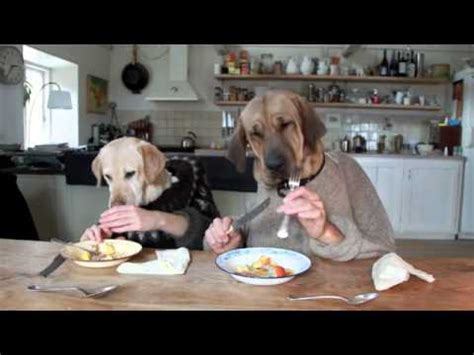 hilarious dinner two dogs dining