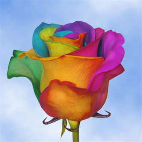 rainbow colored roses globalrose 50 stems of multi color rainbow roses your