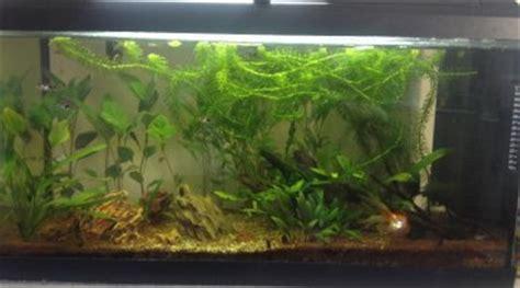 Mon Aquarium 54l Communautaire Projet Aquascape Facile Pour Mon Aquarium De 96 Litres
