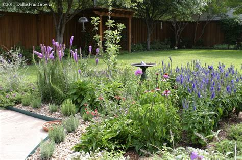 Houston Plant And Garden by 5607 Landscape Plants Perennials That Are