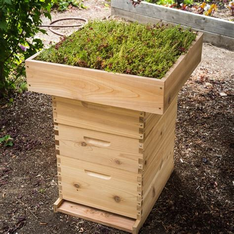 top bar hive roof top 25 ideas about bee hives on pinterest the roof bee