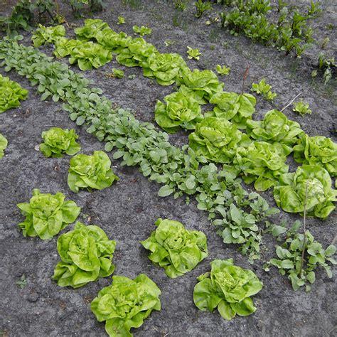 Garten Im April by Der Garten Im April Aussaat Im Gem 252 Segarten Und