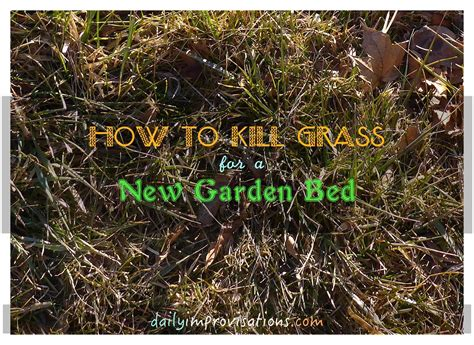 Killing Grass by How To Kill Grass For A New Garden Bed