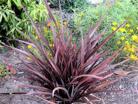 Design My Yard late to the garden party foliage follow up may 2014