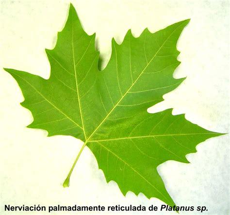 imagenes hojas de sen practica n 186 8