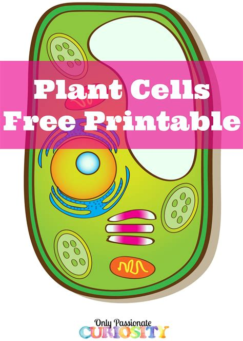printable animal cell plant cells printable pack shops free printable and the