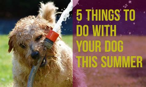 things to do with dogs partners