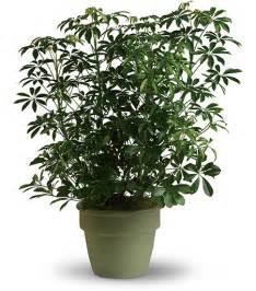 Foliage Of Plants - funeral plants