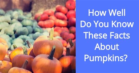 How Well Do You These Hotels by How Well Do You These Facts About Pumpkins Quizpug