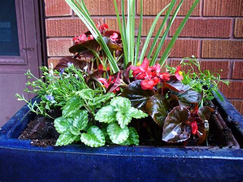 outside at home summer flower pot arrangements