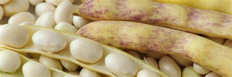 cuisiner les cocos de paimpol le coco de paimpol cuisine 224 l ouest