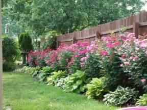 huge landscape landscaping ideas for knockout roses