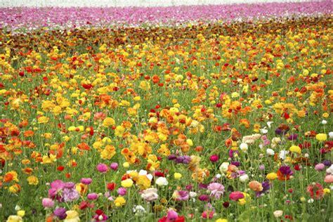 Carlsbad Flower Garden Flower Garden Carlsbad Carlsbad Flower Gardens Jjdmsinger Carlsbad Flower Gardens Flickr