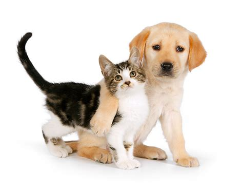 puppies hugging kittens and puppies hugging image search results