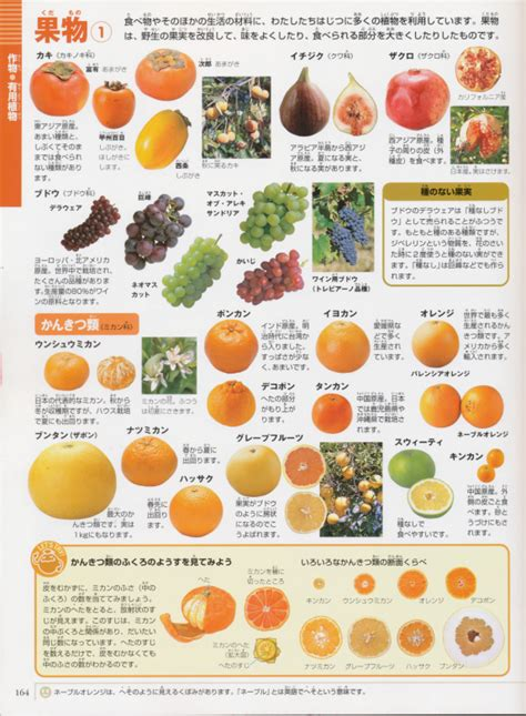 vegetables in japanese let s take a look how many of fruits and vegetables