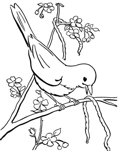 bird eating coloring page bird eating caterpillar coloring pages birds coloring