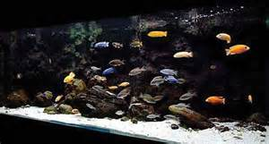 Setting up a Lake Malawi Cichlid Aquarium   The Fishkeeper