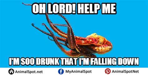 Octopus Meme - octopus memes