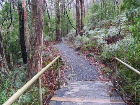 mount lofty botanic gardens nature trail mt lofty botanical gardens find a place to