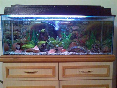 Decorating Ideas For Fish Tank Fish Tank Decoration Ideas Decorating Ideas