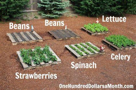 How To Start A No Fuss Vegetable Pallet Garden Pallet Vegetable Garden