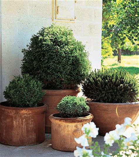 Boxwoods In Planters by Grounded Design By Rainer The One Plant Pot