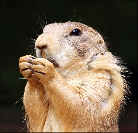 why are dogs called dogs why are prairie dogs called that just meowin