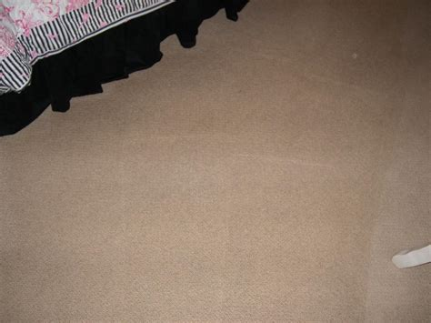 carpet cleaning winter garden fl impressions carpet tile rug cleaning