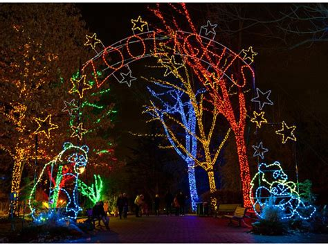 san francisco zoo lights zoolights gin grr bread habitat competition coming to