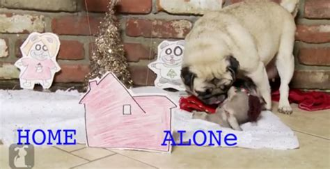 pug home alone home alone remake starring a pug things