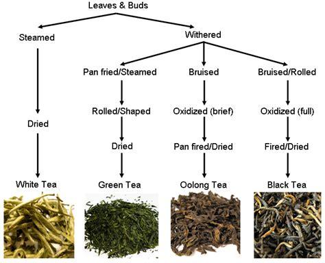 Process Of Tea Essay Mfawriting515 by Talk White Tea