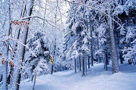 desktop nexus christmas winter nexus winter wallpaper wallpapersafari