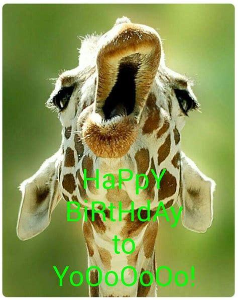 Giraffe Birthday Meme - happy birthday to yooooooo giraffe meme happy