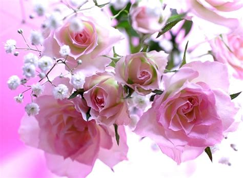 imagenes de flores hermosas para facebook image gallery linda s imagens de rosas