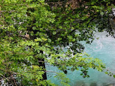 il letto fiume come si chiama quella luce di il fiume di nome frigido