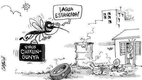 imagenes del zika en blanco y negro una picadura end 233 mica el virus chikungunya del