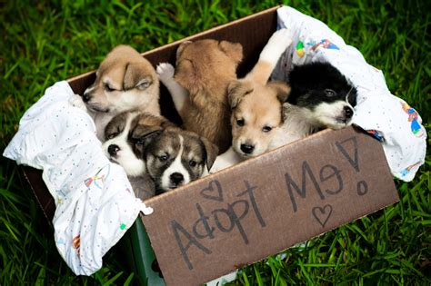 where to adopt a near me adopt me picpetz