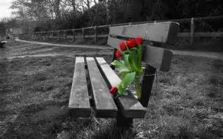 photo noir et blanc banc fleurs de tulipes rouges hd