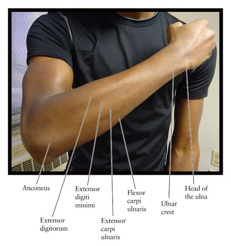 what do you call the side of a boat human anatomy for the artist the dorsal forearm part 1