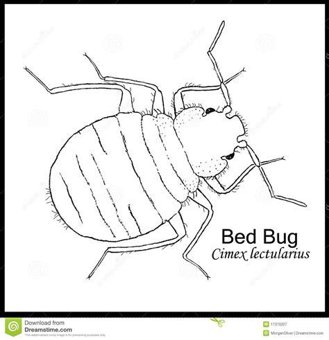 bed bugs en español wanze dargestelltes plakat stockbild bild von ausbildung