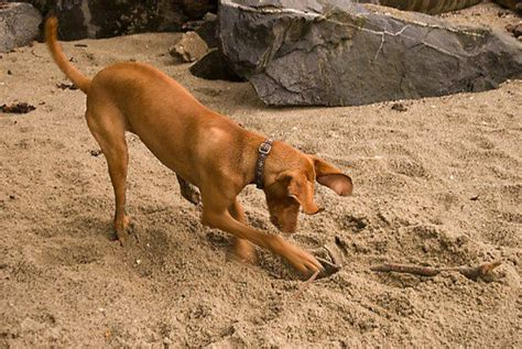 how to get a puppy to stop digging how to your to stop digging