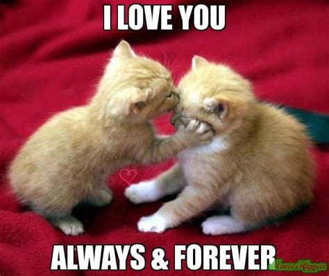 Cute Love Meme - i love u meme funny memes about love