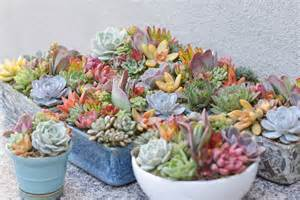 Succulent Arrangements Succulent Arrangements Perfect For Housewarming Gifts I Dream Of Succuentsi Dream Of Succuents