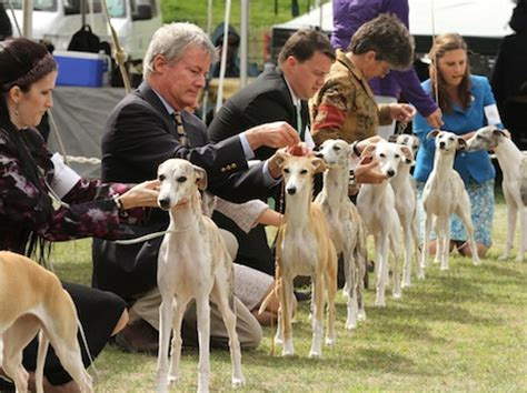 Akc Events Calendar Events Across The U S This Labor Day Weekend