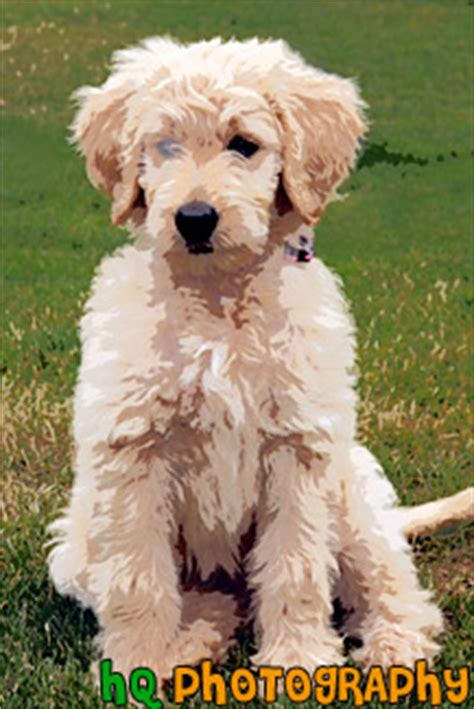 goldendoodle puppy panting vertical painting pictures