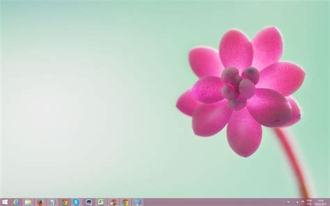 rose themes for windows 8 windows 10 theme download