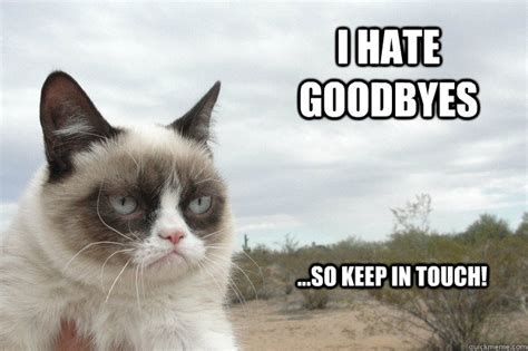Goodbye Cat Meme - funny animal goodbye pictures www pixshark com images