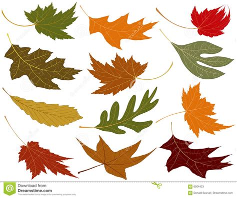 wind blown fall leaves stock photos image 6504423