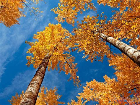 pretty trees wallpapers beautiful autumn scenery wallpapers