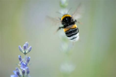 Jims Honey Minnie C Oe ban on neonicotinoid pesticides falters in european